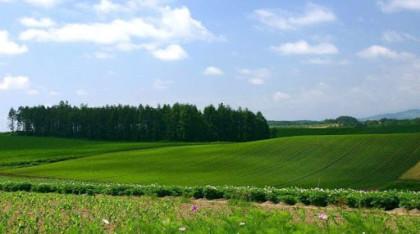 На eGov.kz доступны еще 3 услуги в сфере земельных отношений